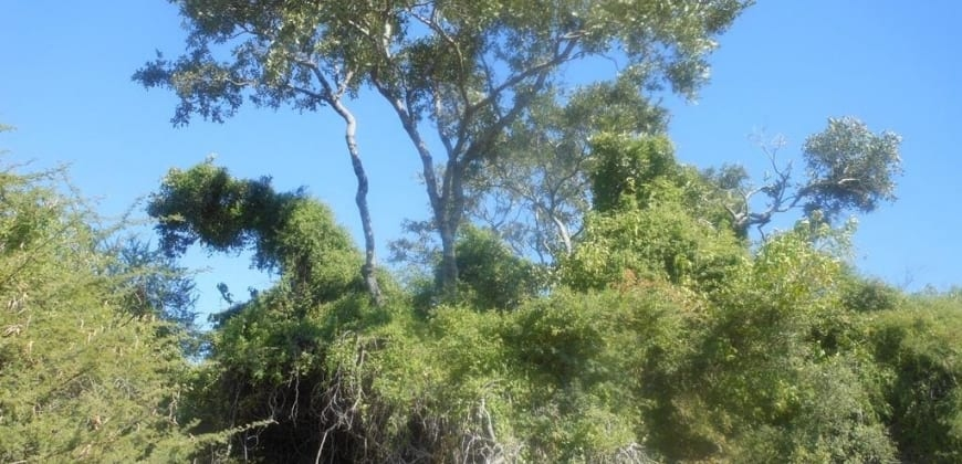 Talls trees found in the property