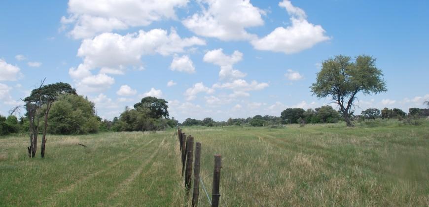 The buffalo fence