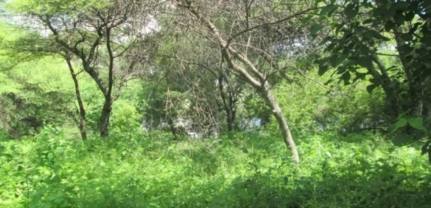 Trees/vegetation