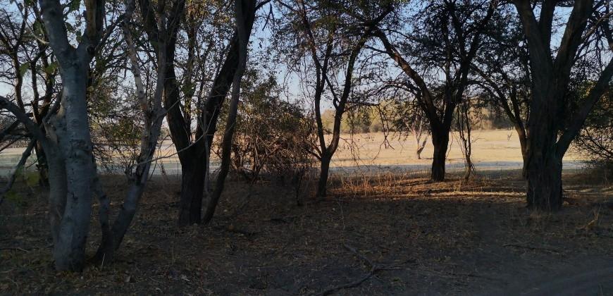 Overlooking Shashe stream