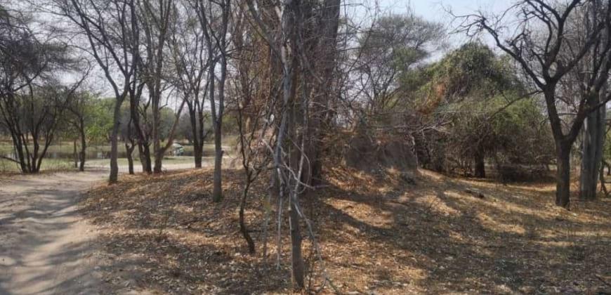 Big trees on ht plot