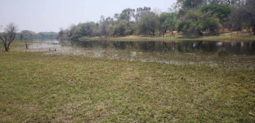 vegetation/river view