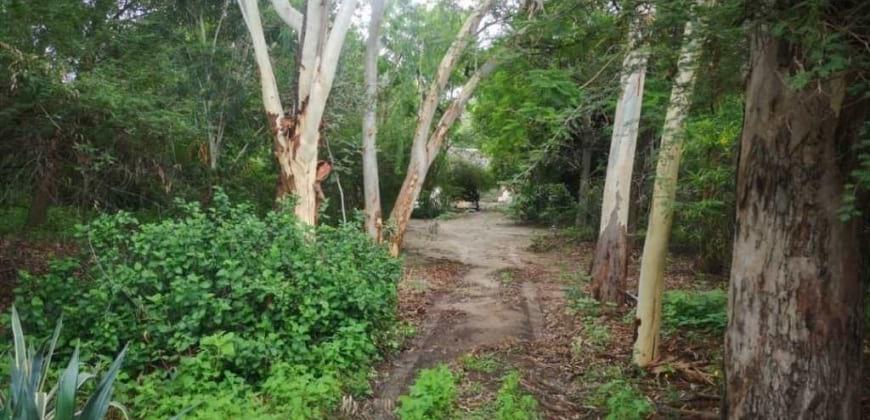 Garden/big trees