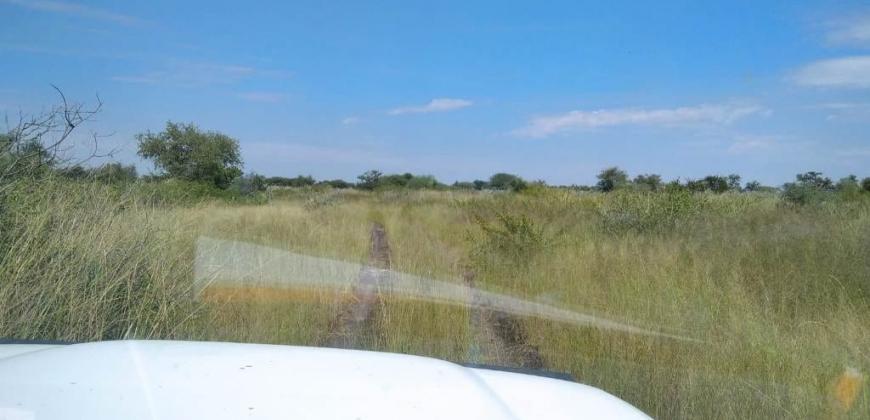 Paddock/vegetation