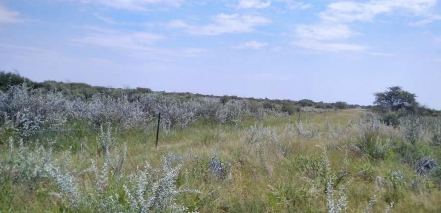 Vegetation/grazing land